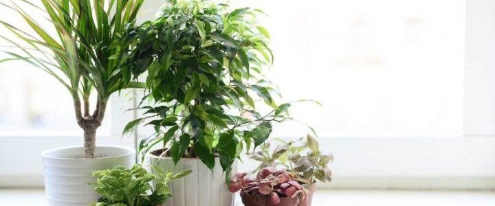 Vybíráme pokojové rostliny. Jaké patří do stínu a které čistí vzduch?
